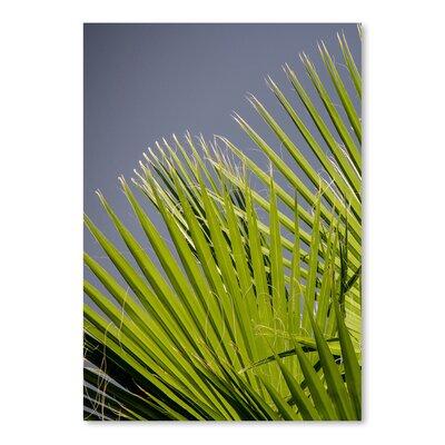 Americanflat Wonderful Dream Beach Style Palm Leaf Photographic Print
