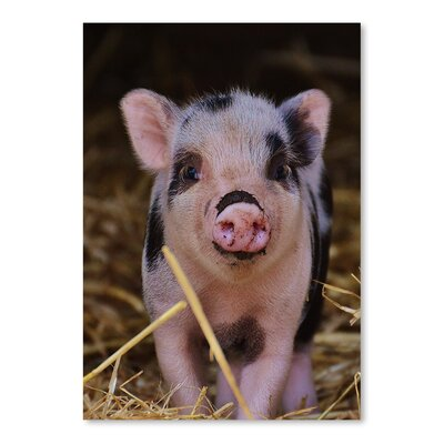 Americanflat Wonderful Dream Farm Animal Pig Photographic Print