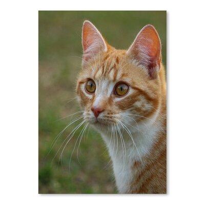 Americanflat Wonderful Dream Dangerous Tiger Cat Photographic Print