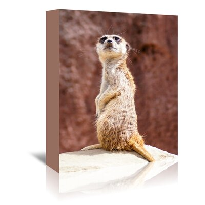 Americanflat Wonderful Dream African Meerkat Animal Photographic Print Wrapped on Canvas