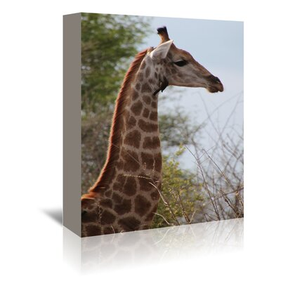Americanflat Wonderful Dream African Giraffe Savannah Photographic Print Wrapped on Canvas