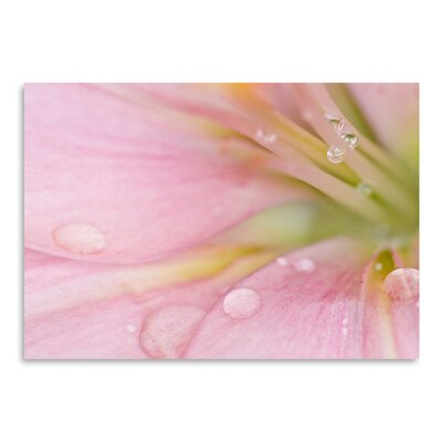Americanflat Lily with Raindrops' by Melanie Viola Photographic Print