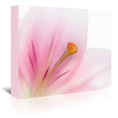 Americanflat 'Beautiful Lily' by Melanie Viola Photographic Print Wrapped on Canvas