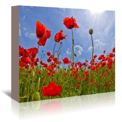 Americanflat Field of Poppies' by Melanie Viola Photographic Print Wrapped on Canvas