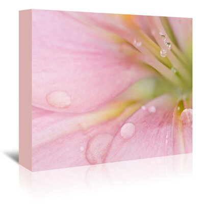 Americanflat Lily with Raindrops' by Melanie Viola Photographic Print Wrapped on Canvas