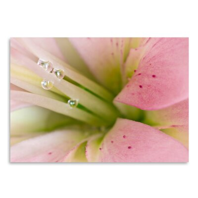 Americanflat 'Lily with Raindrops II' by Melanie Viola Photographic Print
