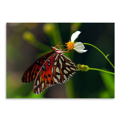 Americanflat 'Lovely Butterfly' by Melanie Viola Photographic Print