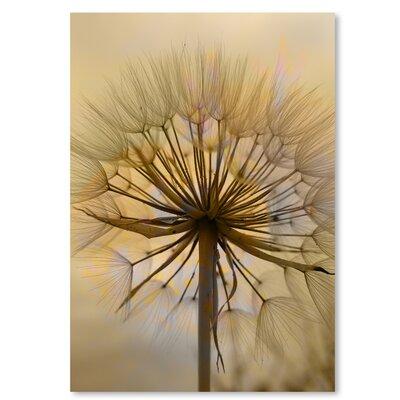 Americanflat Wonderful Dream Dandelion Flower Photographic Print