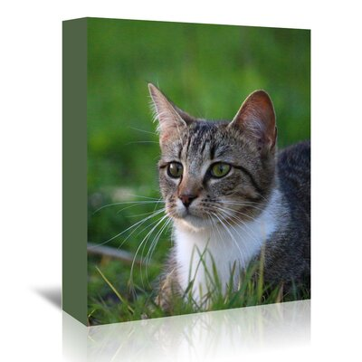 Americanflat Wonderful Dream Cat in the Nature Animal Photographic Print Wrapped on Canvas