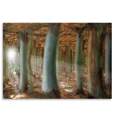 Americanflat Odd Forest' by Melanie Viola Graphic Art