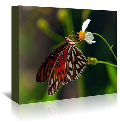 Americanflat 'Lovely Butterfly' by Melanie Viola Photographic Print Wrapped on Canvas