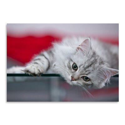 Americanflat 'Lovely Kitten' by Melanie Viola Photographic Print