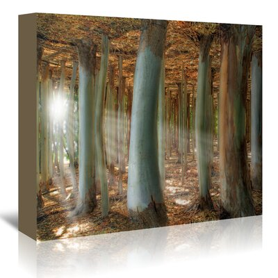 Americanflat 'Odd Forest' by Melanie Viola Photographic Print Wrapped on Canvas