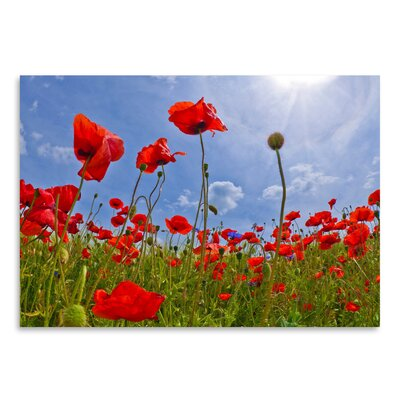 Americanflat 'Field of Poppies' by Melanie Viola Photographic Print