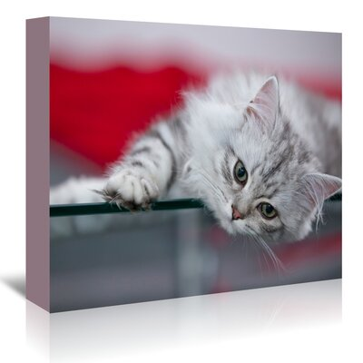 Americanflat 'Lovely Kitten' by Melanie Viola Photographic Print Wrapped on Canvas