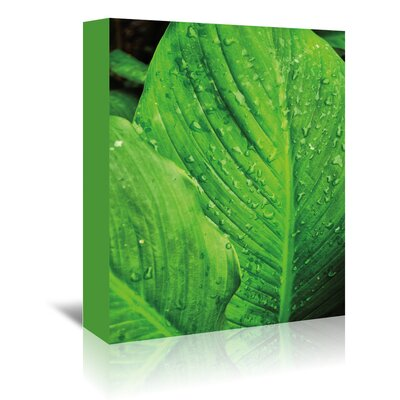 Americanflat 'Jardim Botanico I' by Golie Miamee Photographic Print Wrapped on Canvas