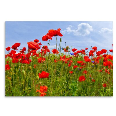Americanflat 'Field of Poppies - Panoramic View' by Melanie Viola Photographic Print