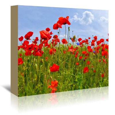 Americanflat 'Field of Poppies - Panoramic View' by Melanie Viola Photographic Print Wrapped on Canvas