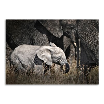 Americanflat 'Baby Elephant I' by Golie Miamee Photographic Print