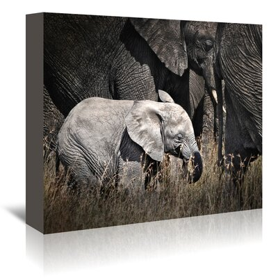 Americanflat 'Baby Elephant I' by Golie Miamee Photographic Print Wrapped on Canvas