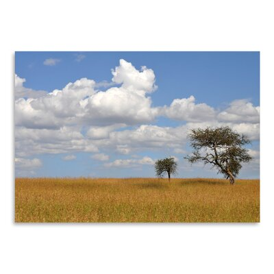 Americanflat 'Kenya Tree' by Golie Miamee Photographic Print