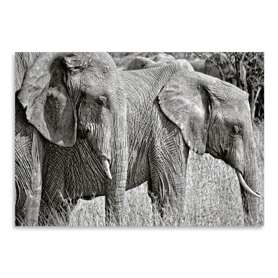 Americanflat 'Silver Elephant' by Golie Miamee Photographic Print
