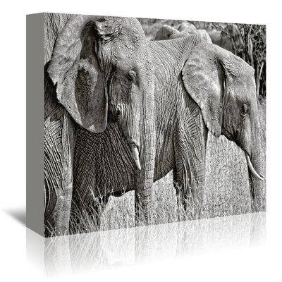 Americanflat 'Silver Elephant' by Golie Miamee Photographic Print Wrapped on Canvas