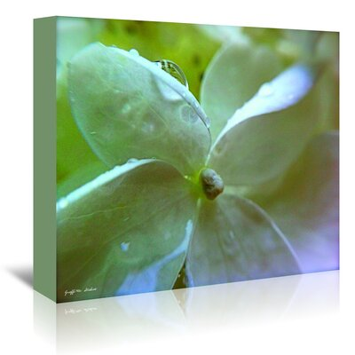 Americanflat White Flower Dew Drop II' by Graffi Tee Studios Photographic Print Wrapped on Canvas