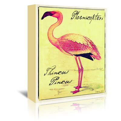 Americanflat 'Thincus Pincus Flamingo' by Graffi Tee Studios Graphic Art Wrapped on Canvas