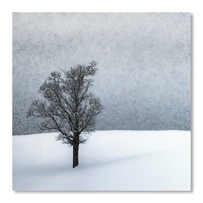 Americanflat 'Lonely Tree Idyllic Winterlandscape' by Melanie Viola Photographic Print