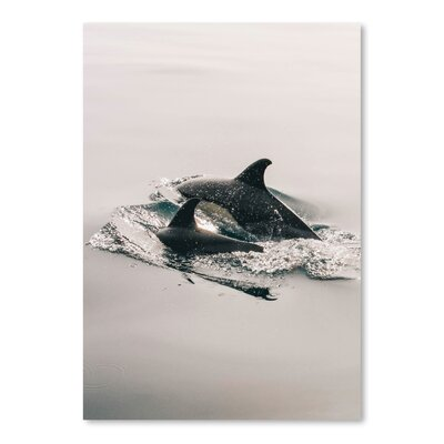 Americanflat Wonderful Dream Family Dolphin Sea Life Photographic Print