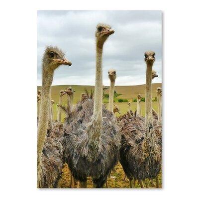 Americanflat Wonderful Dream Ostrich Australian Bird Photographic Print