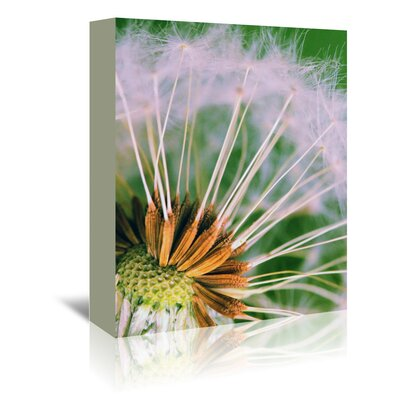 Americanflat Wonderful Dream Macro Dandelion Flower Photographic Print Wrapped on Canvas