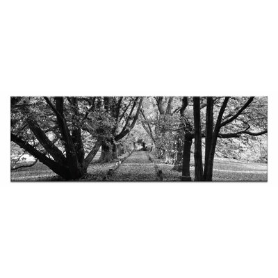 Artist Lane Golden Grove by Andrew Brown Photographic Print Wrapped on Canvas in Black/White