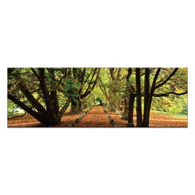 Artist Lane Golden Grove by Andrew Brown Photographic Print Wrapped on Canvas