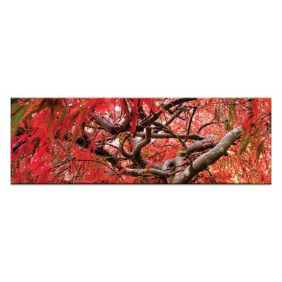 Artist Lane Japanese Maple by Andrew Brown Photographic Print Wrapped on Canvas