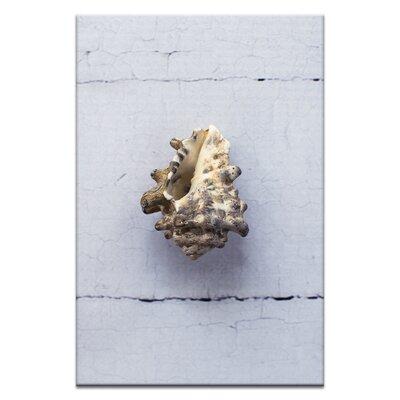 Artist Lane Wild Vasum Mollusk by Emma Relph Photographic Print Wrapped on Canvas