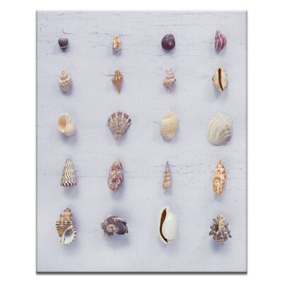 Artist Lane Seashell Grid 2 by Emma Relph Photographic Print Wrapped on Canvas