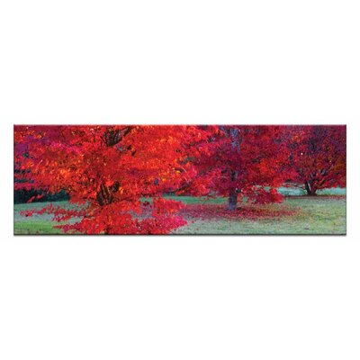 Artist Lane Bright Reds by Andrew Brown Photographic Print Wrapped on Canvas