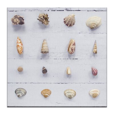 Artist Lane Seashell Grid 1 by Emma Relph Photographic Print Wrapped on Canvas