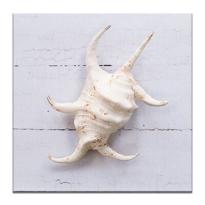 Artist Lane White Spider Conch by Emma Relph Photographic Print Wrapped on Canvas