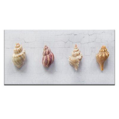 Artist Lane Quad Conch by Emma Relph Photographic Print Wrapped on Canvas