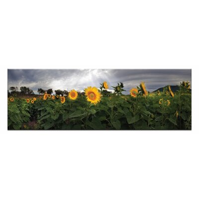 Artist Lane A Little Ray of Sunshine by Andrew Brown Photographic Print Wrapped on Canvas in Green/Grey