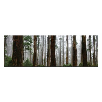 Artist Lane Elderly Giants, Dandenong Ranges by Andrew Brown Photographic Print Wrapped on Canvas
