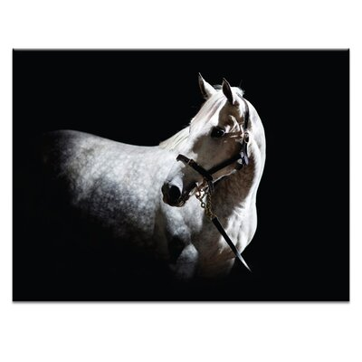 Artist Lane 'Horse 2' by Joe Vittorio Photographic Print on Wrapped Canvas