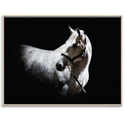 Artist Lane 'Horse 2' by Joe Vittorio Framed Photographic Print on Wrapped Canvas
