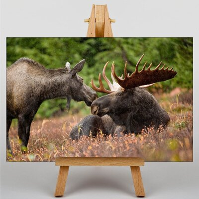 Alpen Home Moose Photographic Print on Canvas