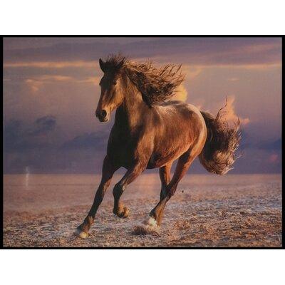 ChâteauChic Wild Horse Glass Photographic Print