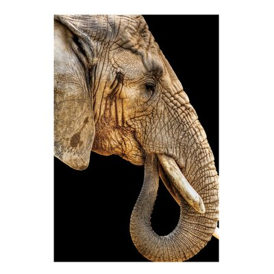 Fjørde & Co Elephant Wall Art