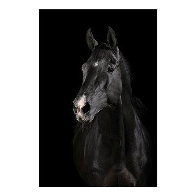 Fjørde & Co Black Stallion Wall Art